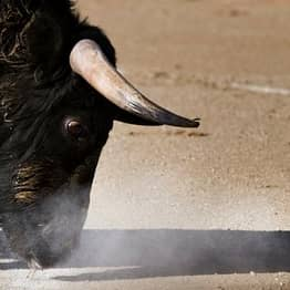 Matador Suffers Ten-Inch Wound After Being Gored Up The Bum By Raging Bull