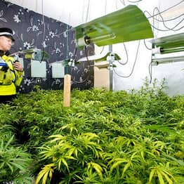 Cannabis Prohibition Has Gone To Pot: Users Of Plant Given Green Light