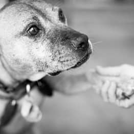 These Heartwarming Images Of Rescued Fighting Dogs Will Restore Your Faith In Humanity