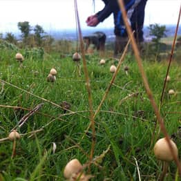 We Spoke To A Guy Who Treats His Severe Anxiety With Magic Mushrooms