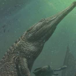 Terrifying Ancient Crocodile Was Nearly The Size Of A Bus