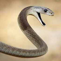 Deadly Black Mamba Snake 'On The Loose' In London
