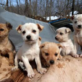 This Woman Is Singlehandedly Raising 200 Dogs She Saved From Meat Farms