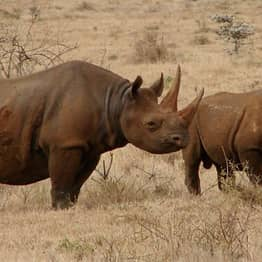 SAS-Trained Snipers Are Getting Involved In The War Against Rhino Poachers