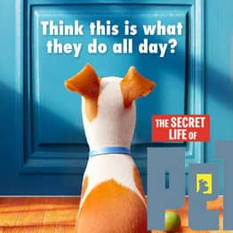 The Secret Life Of Pets: Silly Fun But Far From Purr-Fection