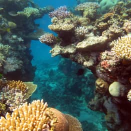 Great Barrier Reef Outlook Officially Downgraded To 'Very Poor' Due To Climate Change