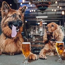 Beer Company Gives Staff A Week Off If They Get A New Puppy