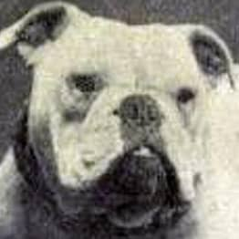 Here's What 'Inbred' Dog Breeds Looked Like 100 Years Ago