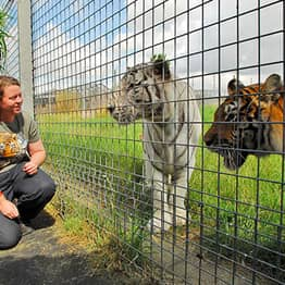 Zookeeper Killed By Tiger At Hamerton Zoo Was Big Cat Campaigner