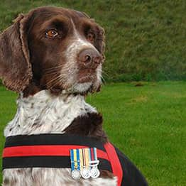 How This British Army Dog Saved 1000 Lives In Combat