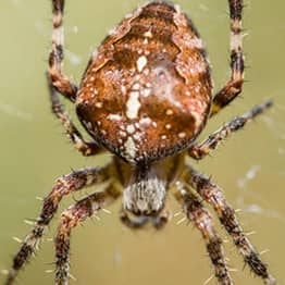 Most Dangerous Spiders In UK Set To Invade Our Homes