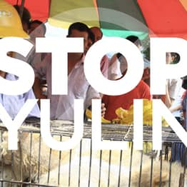 It's Time To Stop Excusing The Dog Meat Trade As A Cultural Tradition
