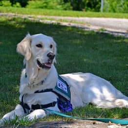 What To Do If A Service Dog Approaches You Without An Owner