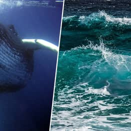 Something Gigantic Appears To Be Whistling At The Bottom Of The Sea