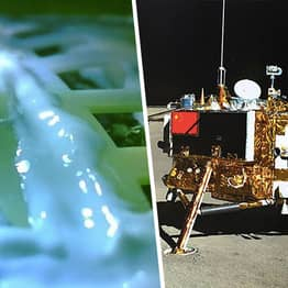 Cotton Seeds Planted On The Moon Have Already Died