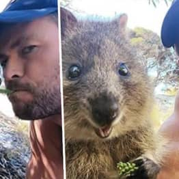 Chris Hemsworth Feeds Quokka With His Mouth
