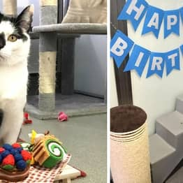 Britain's Loneliest Cat Twizzle Wishes For A New Home For His Birthday