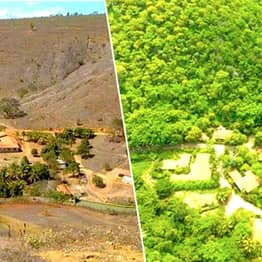Couple Replant Entire Forest To Give Homes To 500 Endangered Species