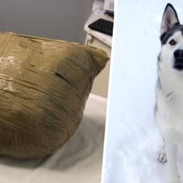 Woman Returns From Holiday 'To Find Her Dead Dog Wrapped In Tape By Kennel'