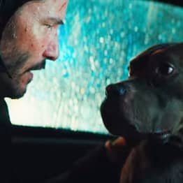 John Wick Makes Sure His Dog Is Safe In New Parabellum Clip