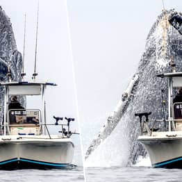 Huge Humpback Whale Leaps Out Of Sea Right Next To Fishing Boat