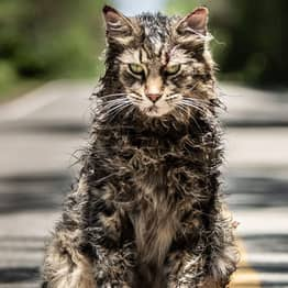 Leo The Cat From Pet Sematary Has Died