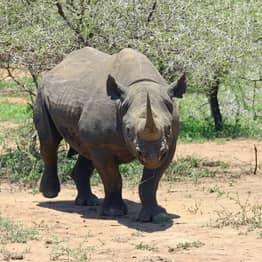 Endangered Rhino Numbers Soar By 1000% In Tanzania, Officials Claim