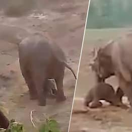 Elephant Tramples Man To Death After Locals Pelted Dead Calf With Stones