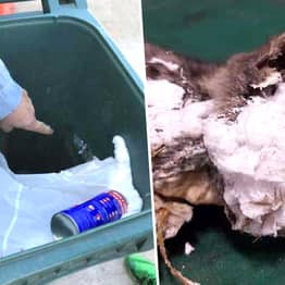 Kitten Sprayed With Hardening Foam And Left In Bin Makes Incredible Recovery