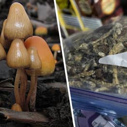 Denver Becomes First City In US To Decriminalise Magic Mushrooms