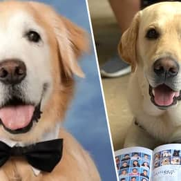 Parkland Students Honour Therapy Dogs With Page In Yearbook