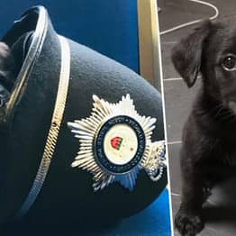 Adorable New Police Puppy Needs A Name