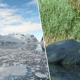 70-Million-Year-Old Fossil Of 'Real-Life Loch Ness Monster' Found In Antarctica
