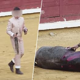 Young Bulls Are Tortured To Death By Youths At Spanish Arena