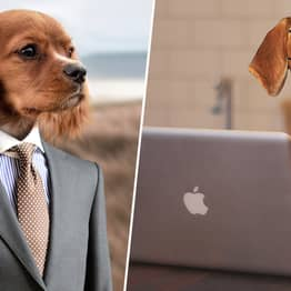 Bring Your Dog To Work Day Is Happening Next Week To Raise Money For Animal Cruelty Charities