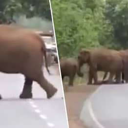 Grieving Elephants Carry Dead Baby In 'Funeral' Procession