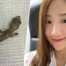 Woman With Ear Pain Finds A Lizard Living In Her Head