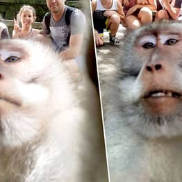 Monkey Poses For Selfie With Family Then Gives Them The Finger