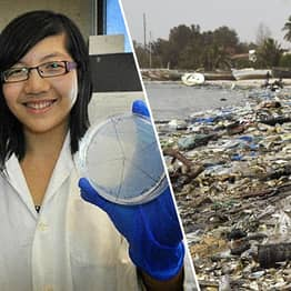 Students Engineer Bacteria That Can Transform Plastic Into CO2 And Water