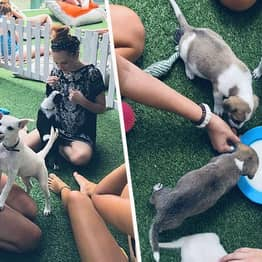 Hotel In Bali Lets You Play With Rescued Puppies By The Pool