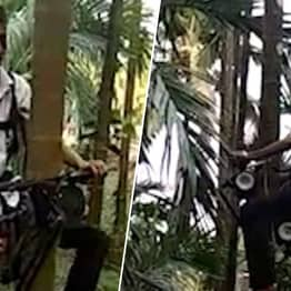 Farmer Builds 'Tree Motorbike' To Scale 100ft Trunks In Search Of Nuts
