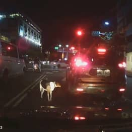 Helpless Dog Chases Car After Owner Abandons It In Street