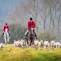 Jeremy Hunt Wants To Bring Back Fox Hunting As PM
