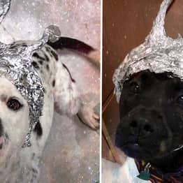 Animal Shelter Wants You To Raid It Instead Of Area 51