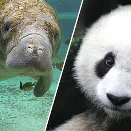 More Than 100,000 Species Are Classified As 'Threatened' For First Time In History
