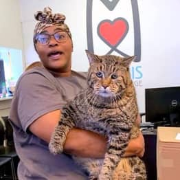 Unbelievably Big 26lb Cat 'Big Boi Mr. B' Looking For Forever Home