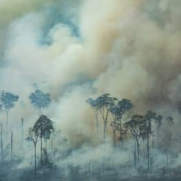 People Are Sharing Information About The Amazon Fires But It's Totally Untrue