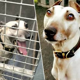 Britain's Loneliest Dog Has Spent 900 Days Waiting For Someone To Adopt Him