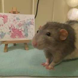 Art Student Trains Her Pet Rat To Paint With Its Feet