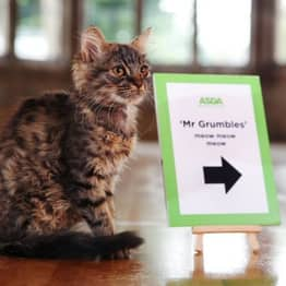 Your Cat Could Be The Star Of ASDA's Christmas TV Advert